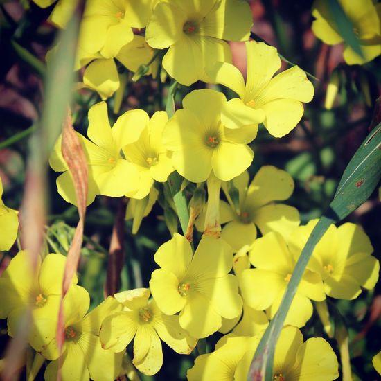 Taking Photos Enjoying Nature Spring Has Arrived Spring Flowers
