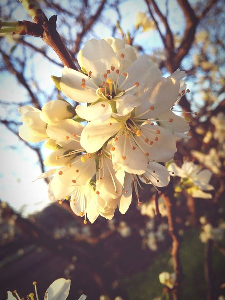 EyeEm Nature Flowers Spiring Spiringcollection