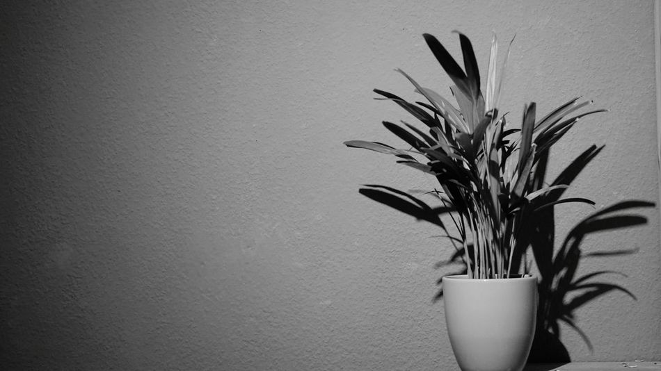 Black And White Room Plant Grey White Background Vase Potted Plant Business Plant Indoors  No People Nature