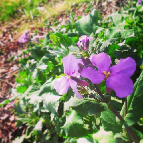 Spring blooms!! 2