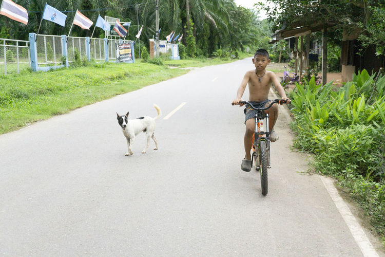 Rear view of man riding horse on road
