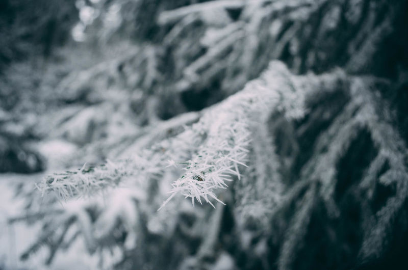 Close-up of frost on branch