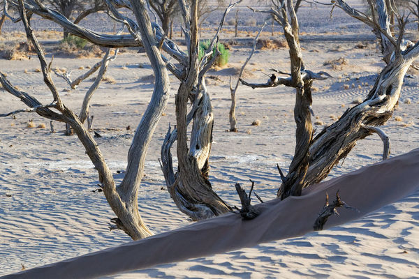 Camel thorn trees; the desert inspires you to look at details Namib Desert Nikon D500 Bare Tree Beauty In Nature Branch Camel Thorn Close-up Day Dead Tree Nature No People Outdoors Scenics Sunlight Tranquility Tree Tree Trunk