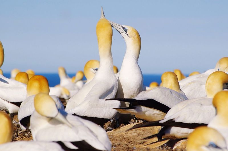 Gannets perching on sea shore against sky