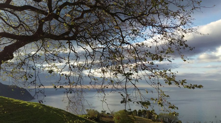 Scenic View Of Sea And Sky With Tree In Foreground