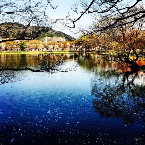 진해내수면환경생태공원 Landscape Relaxing Urban Spring Fever Lake Spring Jinhae The Street Photographer - 2016 EyeEm Awards The Great Outdoors - 2016 EyeEm Awards The Photojournalist - 2016 EyeEm Awards Lakeshore