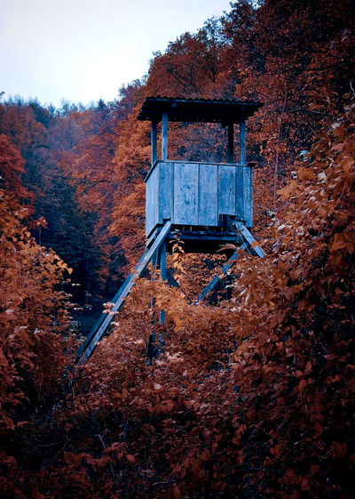 Abandoned house in forest during autumn