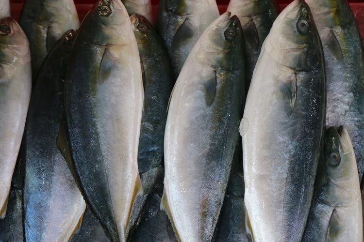 Salted Fishing