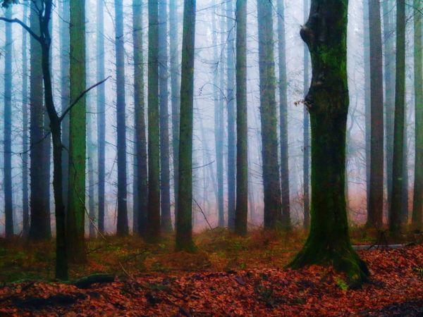 Winterwonderland Fog Foggy Mist No People Outdoors Forest Non-urban Scene Landscape #Nature #photography Landscape Beauty In Nature Nature Bare Tree Tree Trunk