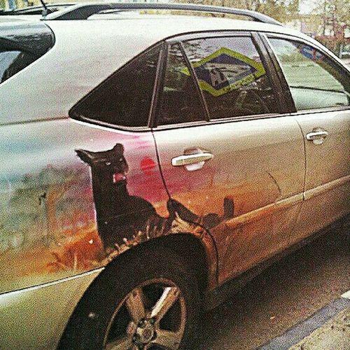 Пантера аэрография Eye4photography  EyeEm Gallery Panther Aerography Taking Photos Car Show Car Porn аэрограф