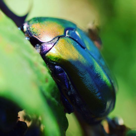 EyeEm Nature Lover Beauty In Nature Macro Nature Insect Close-up Insect Photography Insect Macro  Insects Collection Insect_perfection Insect Photo Insect Paparazzi