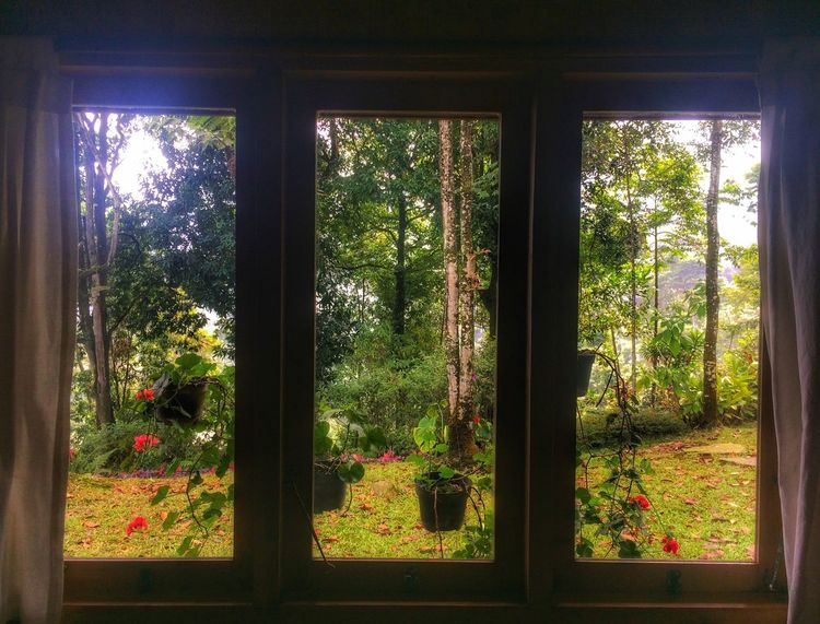 My Favorite Place Room Windows View Nature Cold Days Morning IPhoneography