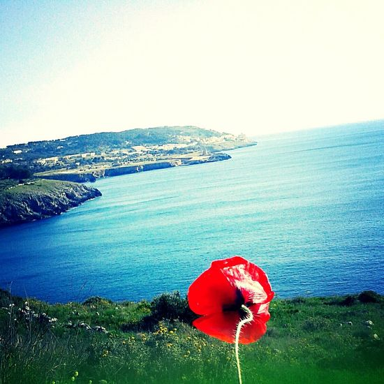 Papaver red rosso mare salento litoranea Red Sea Beach Water Scenics Outdoors Beauty In Nature No People Horizon Over Water Day Sky Nature Astrology Sign Salento Plant Growth Sunlight Sand Close-up Tranquil Scene Beauty In Nature Tranquility Nature Flower Papaverirossi Uniqueness Miles Away
