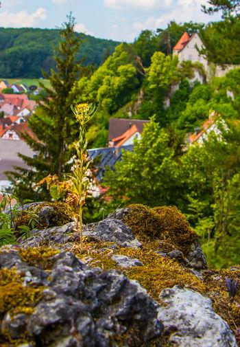 Betzenstein - Frankens kleinste Stadt Bavaria Urlaub Wanderung Wandern Baum Bäume Tree Fallen Gefällt Gestürzt Moos Bemoost Grün Hiking Wood Tree Trunk Day Germany Growth Nature No People Outdoors Plant Tree