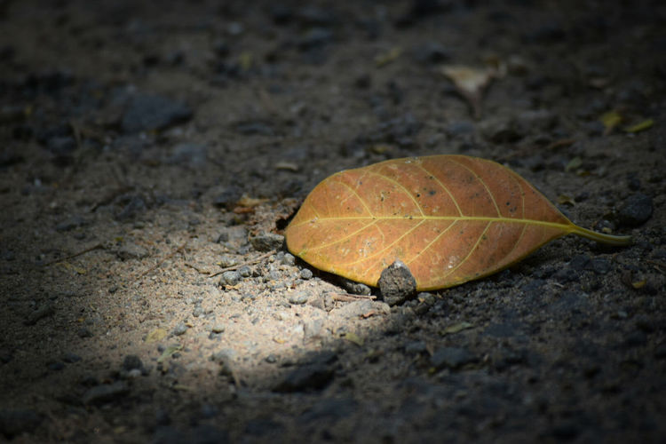 My Click Nikon D3300 Low Angle View Nature Outdoors Nature Leaf Sunrise
