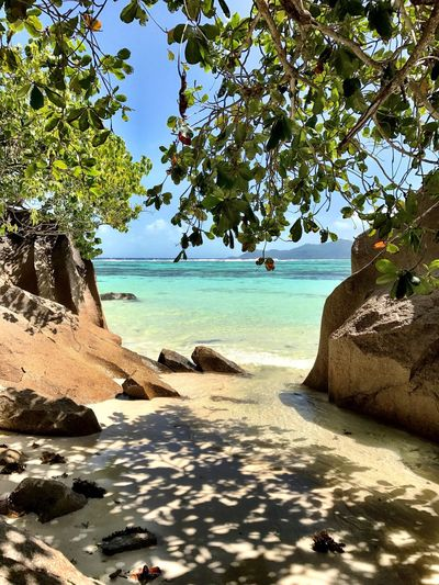 Sea Tree Beauty In Nature Nature Beach Scenics Rock - Object Water Tranquil Scene Tranquility Horizon Over Water Day Outdoors Blue Sky Growth No People Branch Trees Shadows Shade La Digue Amazing Place Seychelles Shotoniphone7