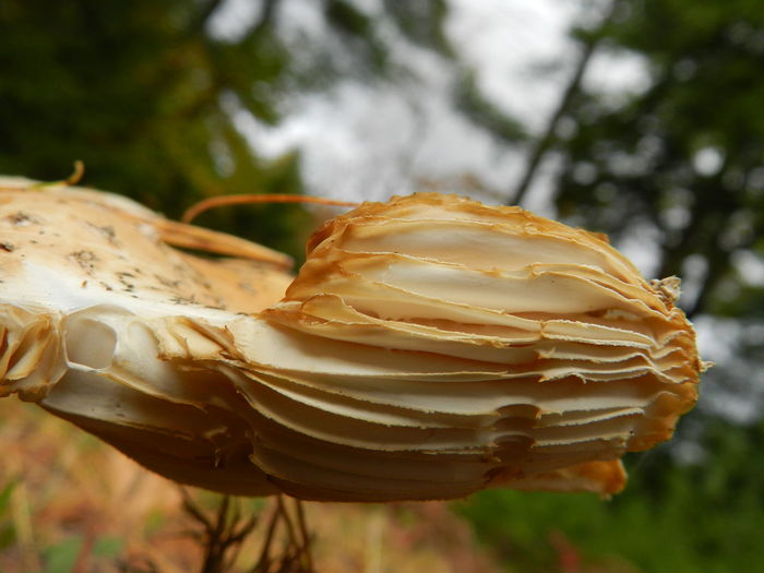 Horizontal Mushroom growth Beauty In Nature Close-up Day Focus On Foreground Fragility Growth Horizontal Mushroom Mushroom Collection Mushroom Fins Mushrooms Nature No People Outdoors Sideways Tree