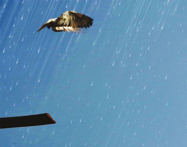 Bird flying over white background