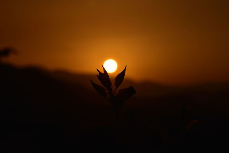 Sunsets Sunset Orange Color Beauty In Nature Silhouette Sky Plant Growth Sun Nature Tranquility No People Scenics - Nature Outdoors