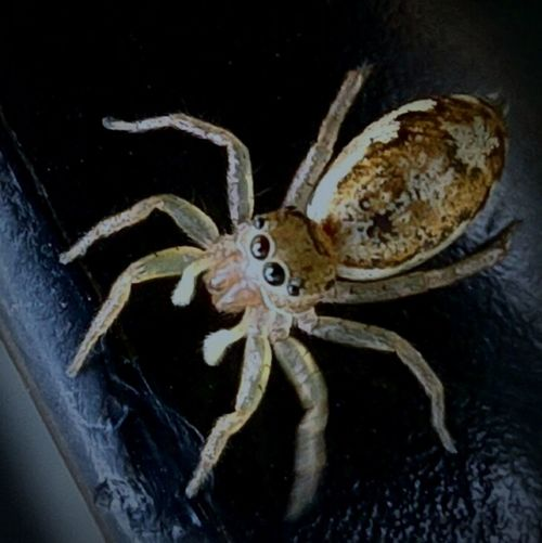 One Animal Animals In The Wild Close-up Animal Themes Animal Wildlife No People Insect Indoors  Spider Day Jumping Spider