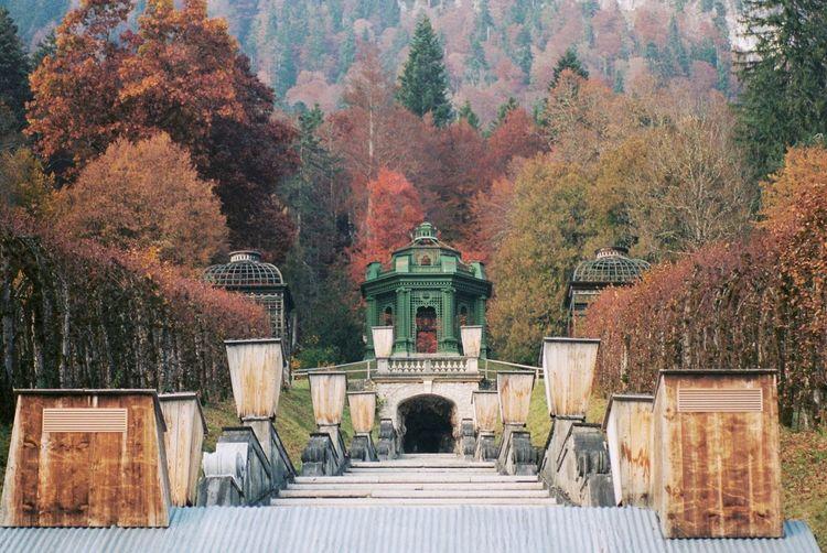 View of autumn trees