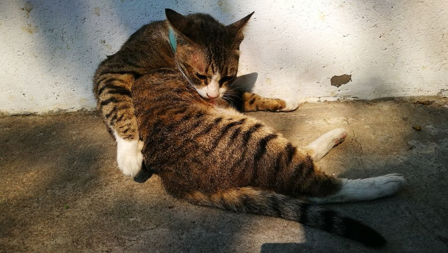 Cat relaxing by wall