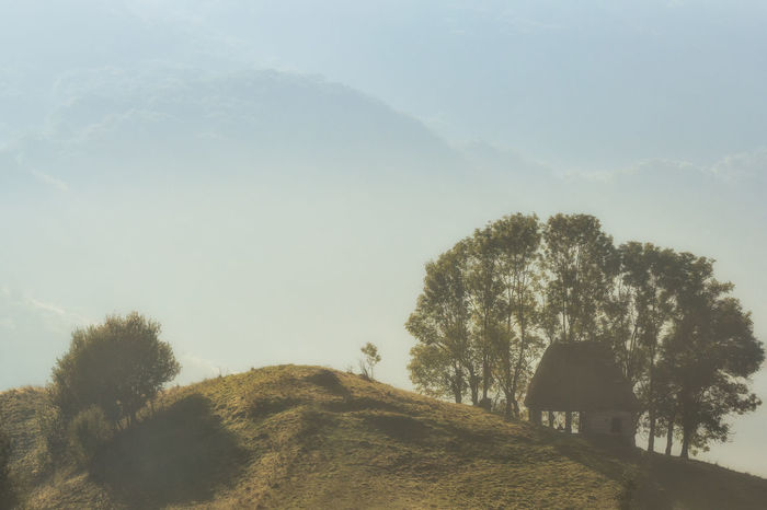 Autumn Green Color Light Morning Beauty In Nature Day Environment Foggy Grass Hazy  Hill Land Landscape Misty Morning Nature Old House Outdoors Rural Scene Scenics - Nature Season  Spring Summer Tranquility Tree Treelined