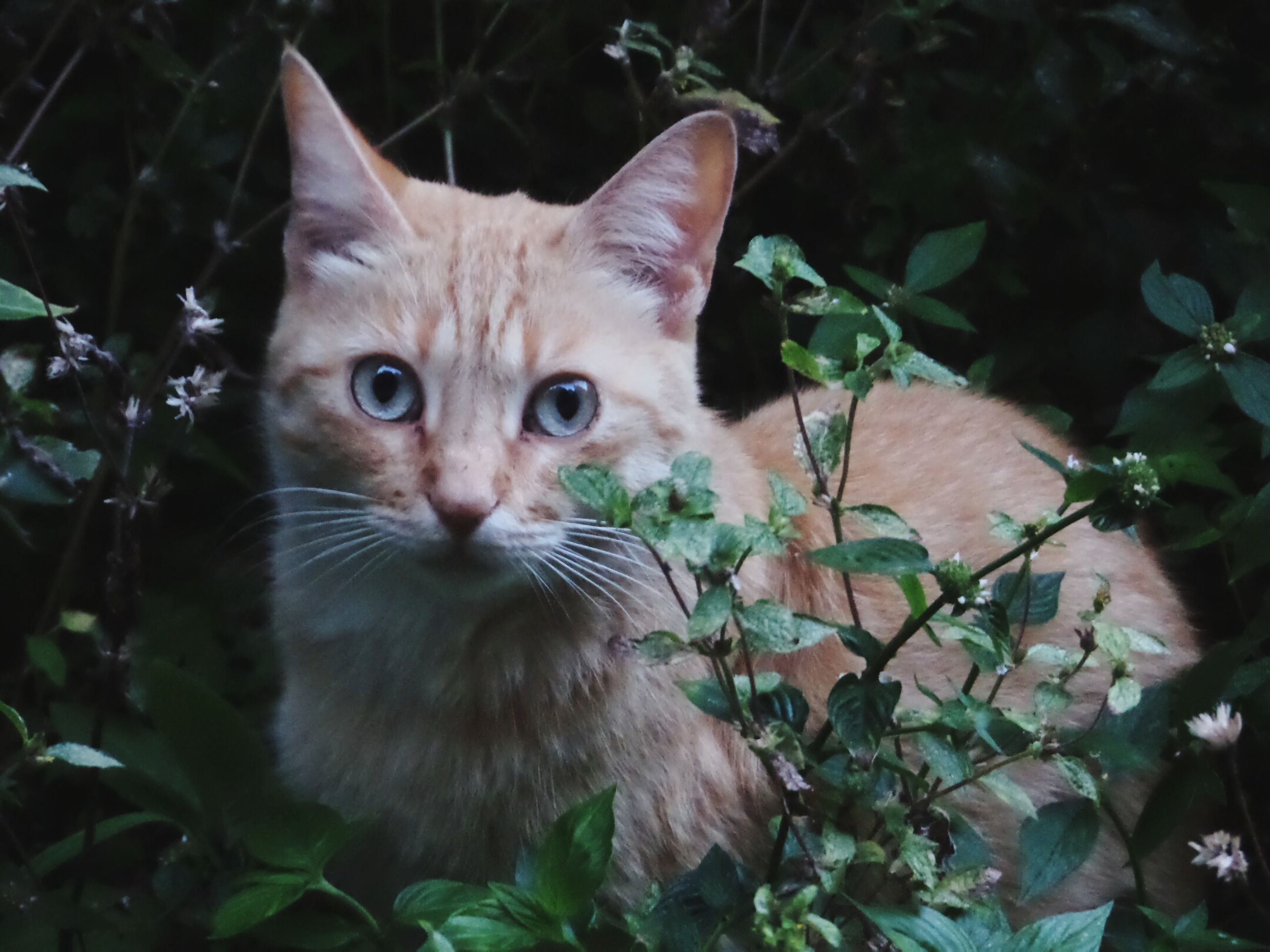 domestic cat, feline, mammal, looking at camera, pets, domestic animals, one animal, portrait, animal themes, plant, leaf, no people, nature, outdoors, day, close-up