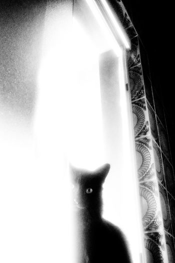 Portrait of cat looking through window at home