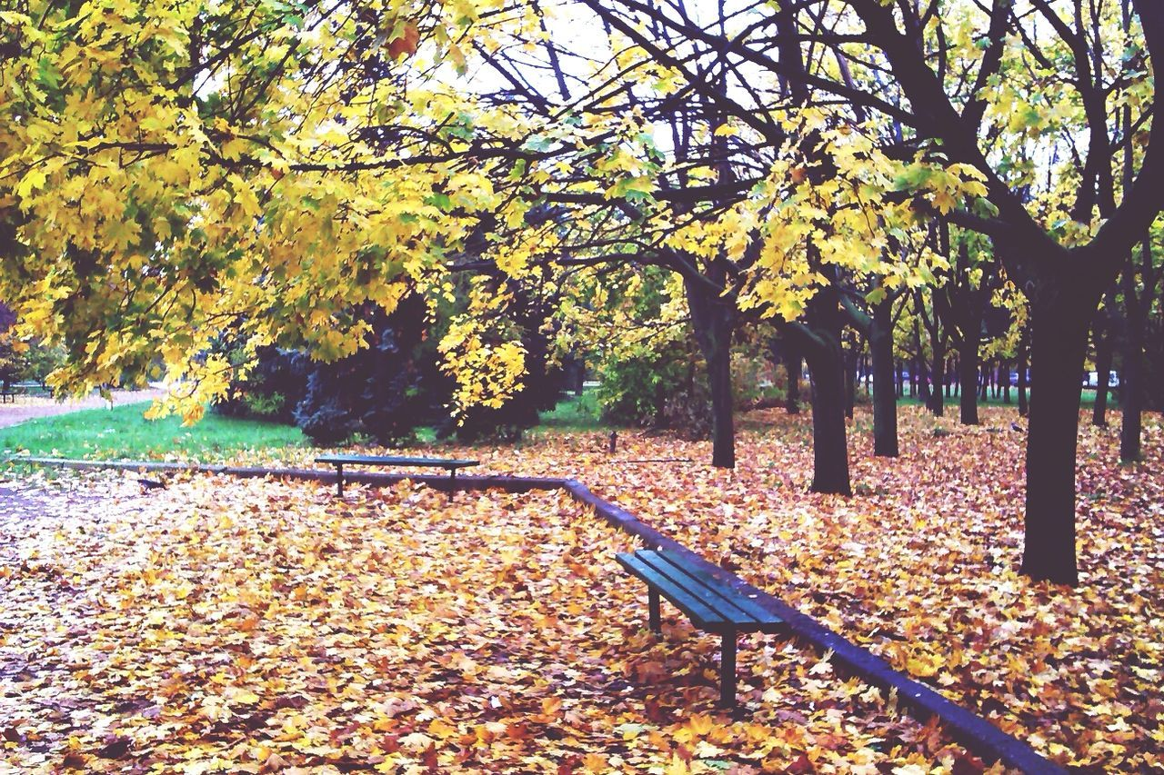 Benches In Park During Autumn