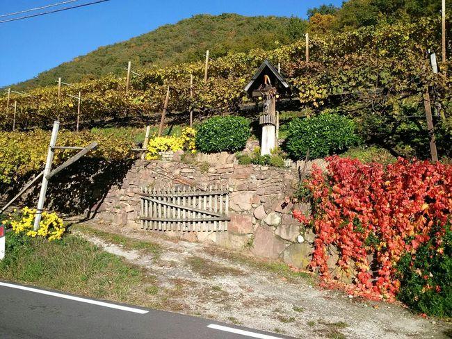 Kaltern Südtirol Alto Adige Weinstraße Autunno