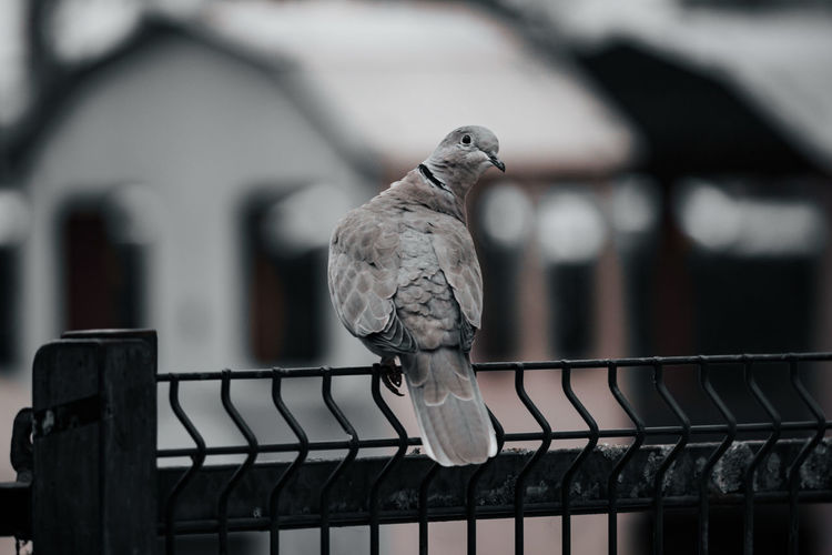 Pigeon sneaking around the park