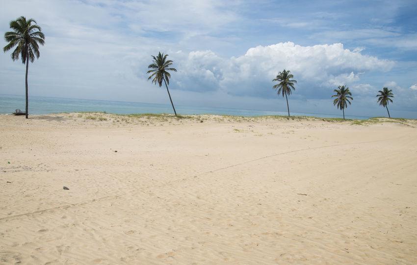 Beach Brazil Cloud - Sky Cumbuco Horizon Over Water Landscape Nature No People Palm Tree Sand Sea Tranquil Scene Tropical Climate