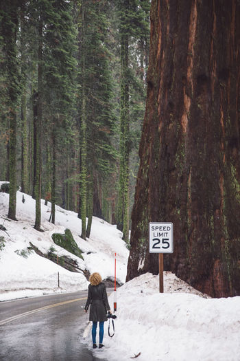 Adventure Cloudy Cold Temperature Curly Hair Forest Full Length Girl Landscape Mountain Nature Nature One Person Real People Road Road Trip Sequoia Sequoia National Park Snow Snowing Standing Tree Tree Trees Weather Winter