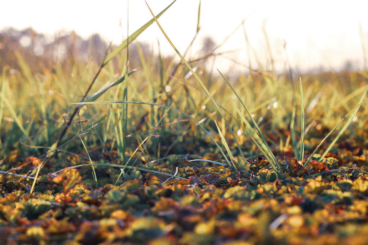 Grass Field Close-up Beauty In Nature Autumn Leaf Growth Nature Plant