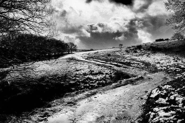 The Twisting Path Beauty In Nature Black & White Cloud Cloud - Sky Cloudy Country Path Day Diminishing Perspective Dirt Road Empty Path Grass Landscape Nature No People Non-urban Scene Outdoors Remote Road Scenics Sky The Way Forward Tranquil Scene Tranquility Tree Vanishing Point