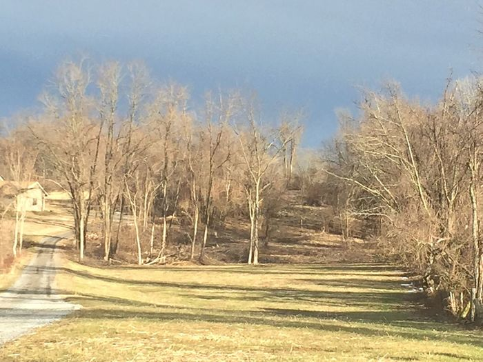 Downingtown Pennsylvania Tree Bare Tree Nature Tranquility Tranquil Scene No People Clear Sky Scenics Outdoors Day Sky Beauty In Nature Landscape
