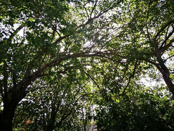 Thegarten Forest Nature Summer Summertime