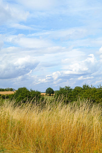 Plant Sky Cloud - Sky Tranquility Tranquil Scene Field Beauty In Nature Scenics - Nature Landscape Land Environment Growth Nature Day No People Grass Rural Scene Agriculture Tree Non-urban Scene Outdoors Weite Felder Wolken