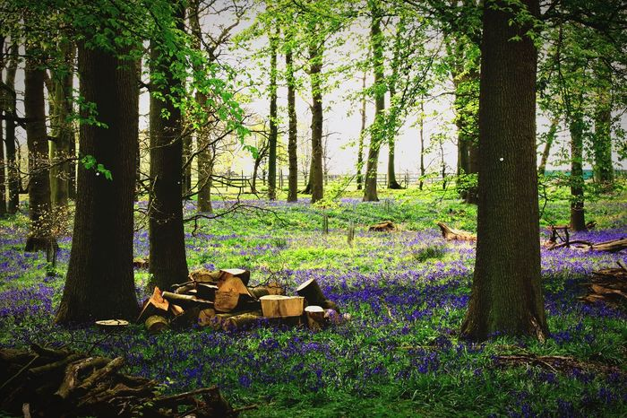 Tree Tree Trunk Nature Forest Log Growth No People Day Outdoors Beauty In Nature Scenics Grass Violet Flowers Viola Purple Green Color