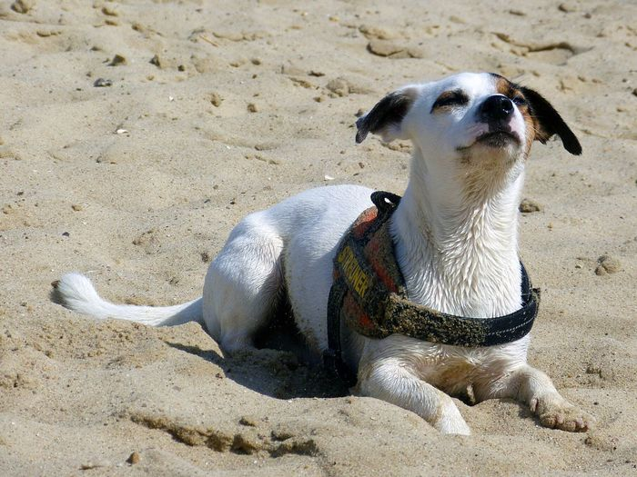 Sun sun sun sun ... yes yes yes yes yes ... sun, the sun :::: Nero The Jack Russell Jack Russell Dogoftheday Dogs Dog Days Dog Life