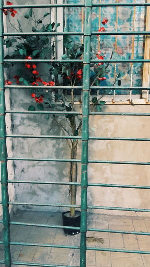 Plantas Y Hojas Green VSCO Cam Calle Street Photo House Streetphotography Urban Love Rejas Outside Colourful Colours Flores