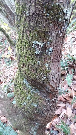 Tree Trunk Perspectives On Nature TwistedWood