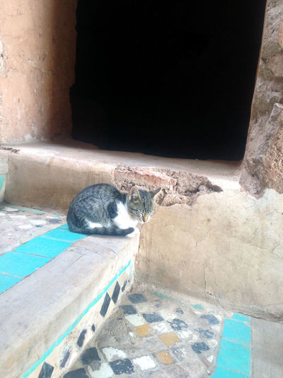 Animal Themes Animal One Animal Mammal Feline Pets Domestic Domestic Animals Cat Vertebrate Relaxation High Angle View Animal Wildlife Nature Domestic Cat No People Day Sunlight Animals In The Wild Outdoors Whisker Oldstairs