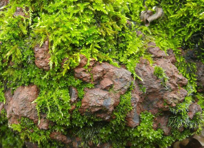 Green Color Mossy Rock Close-up Nature Verdant