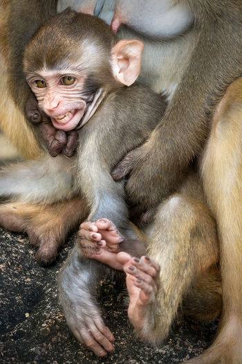 Close-Up Of A Monkey With Infant
