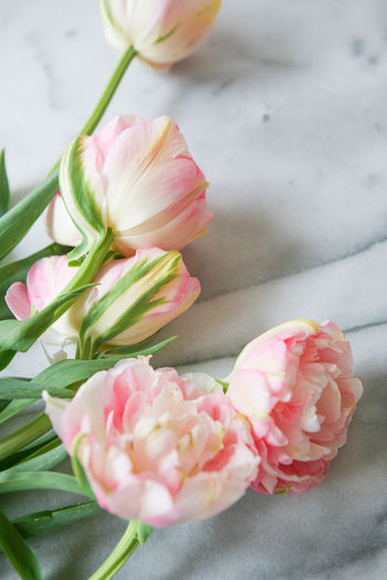 Peonies Tulips Beauty In Nature Close-up Daffodils Day Flatlay Flower Flower Head Fragility Freshness Growth Indoors  Mar Nature No People Peonie Petal Pink Color Ranunculus Spring Spring Flowers Springtime