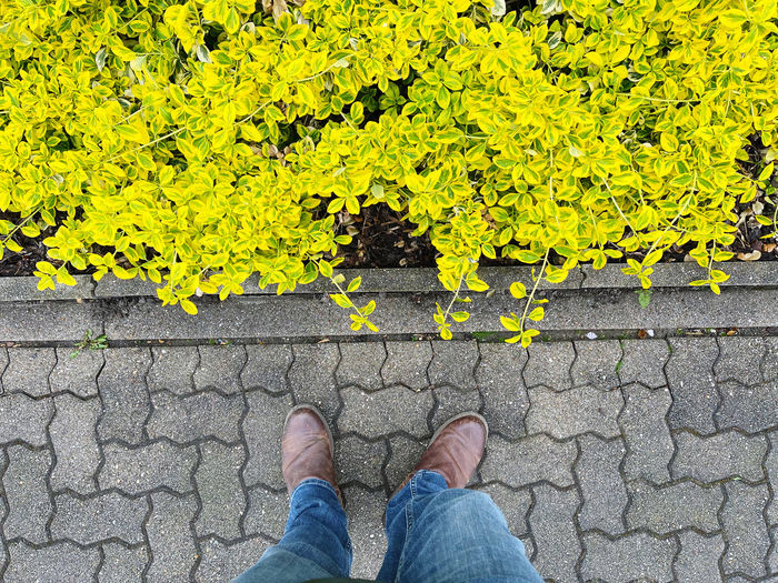 Low section of person standing on yellow leaf