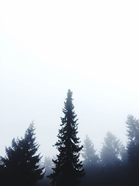 Saw some copy space in the woods. Beauty In Nature Clear Sky Cold Temperature Copy Space Fog Foggy Forest Gradient Landscape Nature Outdoors Pine Tree Scenics Sky Snow Tranquility Tree Winter WoodLand