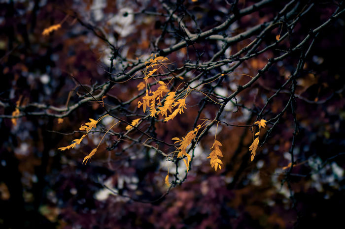 50 Shades of Autumn Fall Beauty Fall Colors Scenics Leaves Beauty In Nature Outdoors Fall No People October Focus Of Foreground Tree Branch Focus On Foreground Close-up Branch Tree Growth Nature Beauty In Nature Flower Fragility Plant Leaves Day Scenics oct
